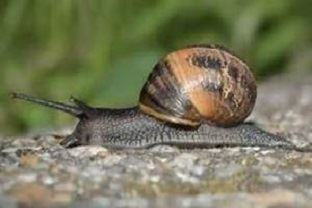 Slow Snail - Save Time